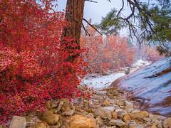 Zion NP East Side Autumn Snow: Zion National Park Autumn Colors Fall Foliage First Snow Fuji GFX100 Fine Art Landscape Photography! Utah Autumn Snow! Elliot McGucken Master Medium Format Nature Photographer Fuji GFX 100 & FUJIFILM GF 32-64mm f/4 R LM WR L