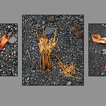 Seaweed on Lava Beach by Rachel Dunsdon
