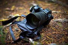 Canon EOS R - Étang de Hasselfurth #6
