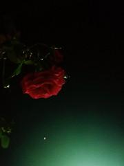 La notte e le stelle