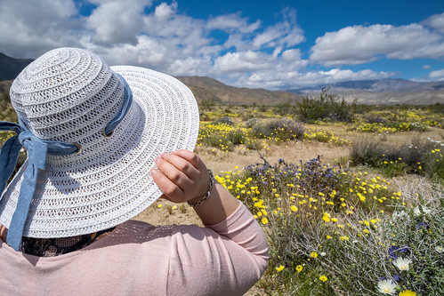 Woman wearing a sun straw hat looks out to wildflowers in the desert in Anza Borrego State Park in California during the superbloom