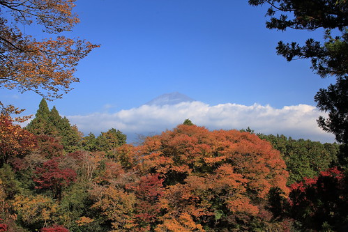 The best time to see the autumn foliage in Japan is from mid-November to mid-December.