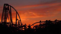 Sunset at Busch Gardens