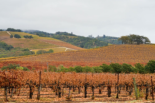 wine Country,