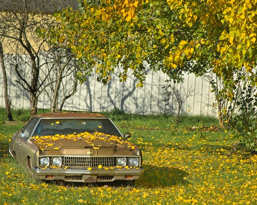 Autumn Abandoned Car 2494 A
