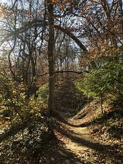 Tree shadows, path in Rock Creek Park near Dumbarton Oaks stream, Washington, D.C.
