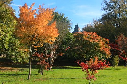 Colours of Bute Park
