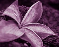 Flora en monochrome