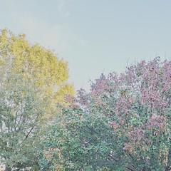 Autumn Afternoon Series #6