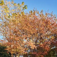 Autumn Afternoon Series #3