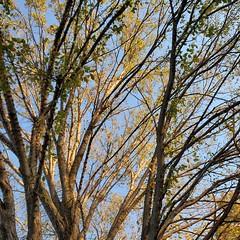 Autumn Afternoon Series #4