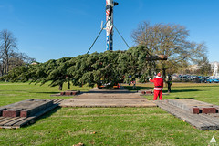 Arrival of the 2020 Capitol Christmas Tree