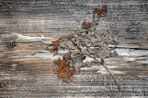 Leaf composition / !EXPLORED 21/11/2020! / Levél-kompozíció