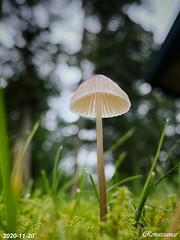 Rainy Season Mushroom
