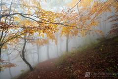Sentieri Flo' e Frassati in autunno (monte Catria)