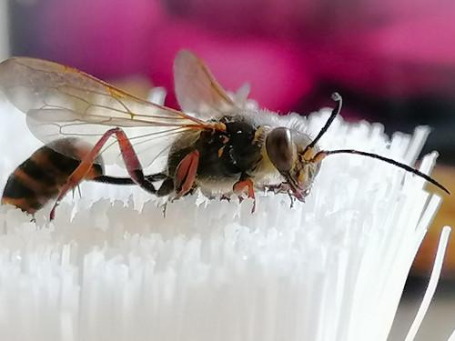 Bee (1287)