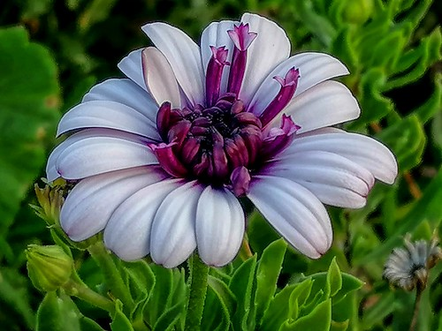 Flower (731)