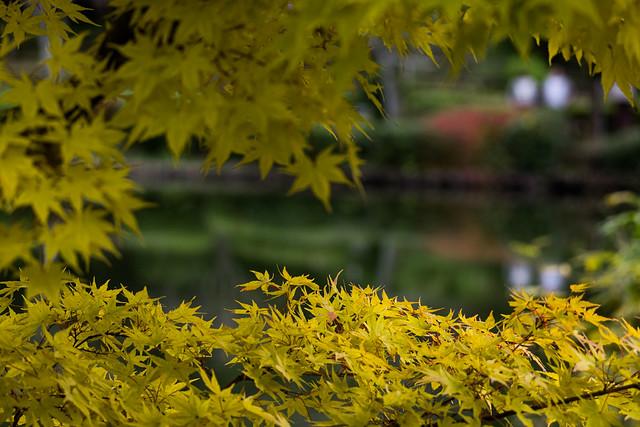 Yellow Screen