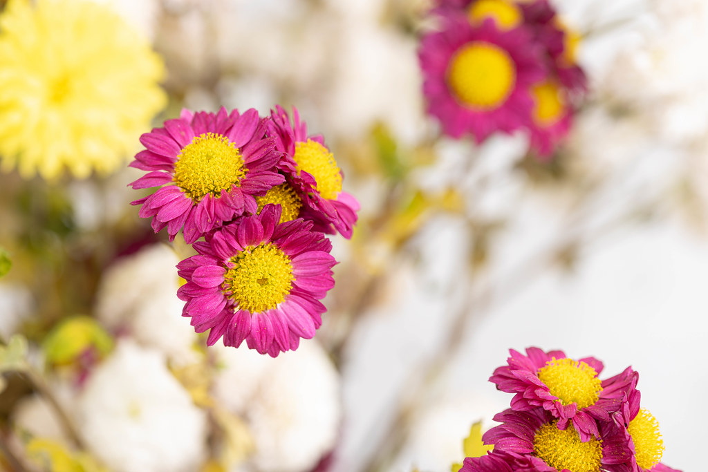 Beautiful bouquet of wildflowers with blurred background