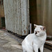 Black-nosed Street Cat