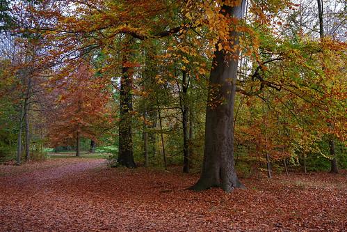 Splendor of colors in autumn