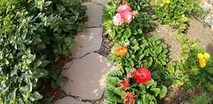 pathflowers