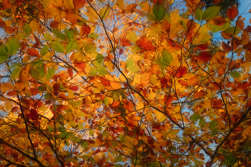 Under a roof of autumn colors