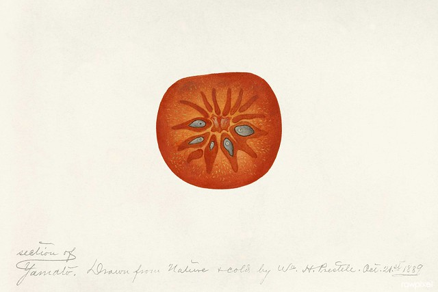 Photo:Persimmon (Diospyros) (1889) byWilliam Henry Prestele. Original from U.S. Department of Agriculture Pomological Watercolor Collection. Rare and Special Collections, National Agricultural Library. Digitally enhanced by rawpixel. By Free Public Domain Illustrations by rawpixel