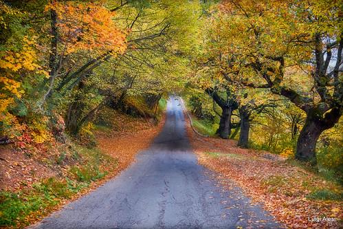 strade d'autunno