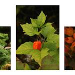 Autumn Colours by Rob Draper