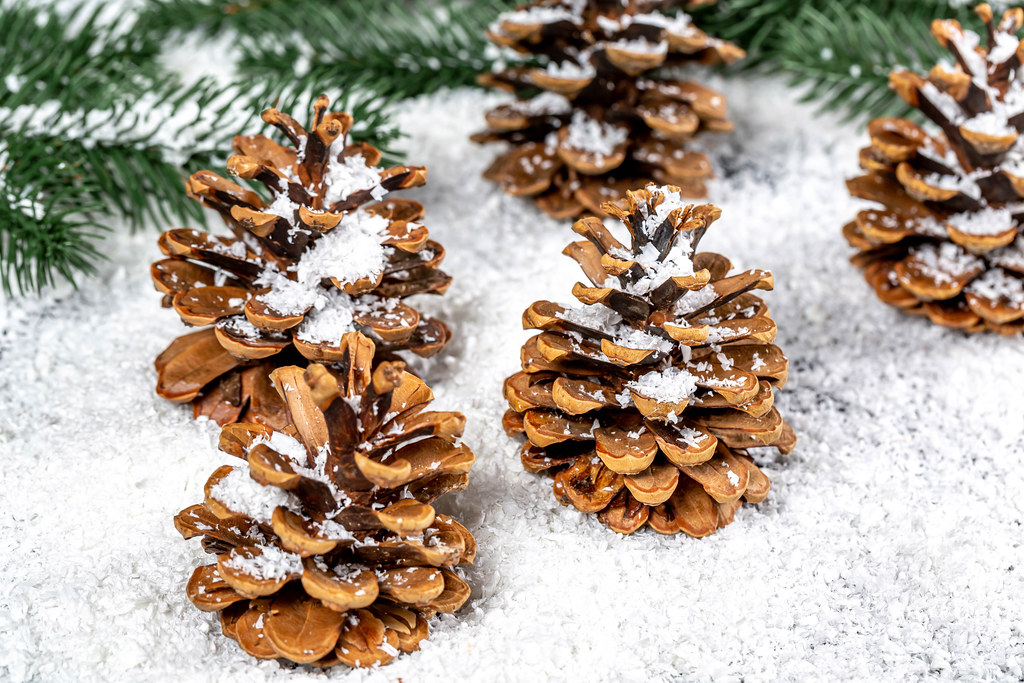 Pine cones with snow and tree branches