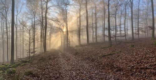 *November forest @ flooded with light*