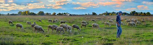 ...τὰ πρόβατα τῆς νομῆς Mου  The lambs of My herbage 10 panorama