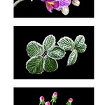 Flowers in 3 moments by Paul Seymour
