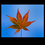 Autumn Leaves by Martin Burrage