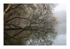 Great Stew Ponds