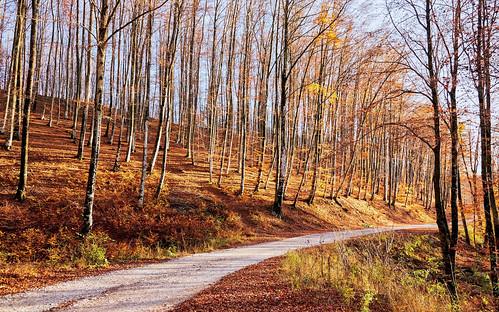 Jesen u šumi - uz cestu prema Gumancu (2)