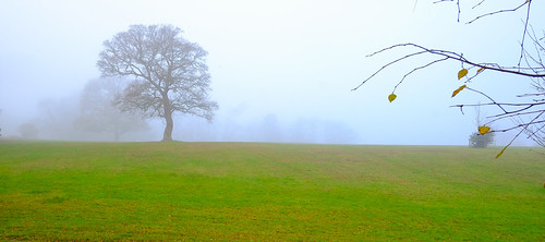 Surrey Hills Morning Mist