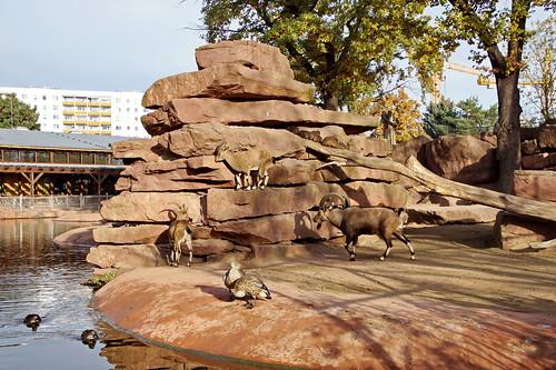 Zoo - Magdeburg
