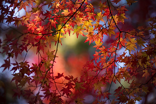 Circle of Autumn