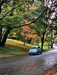 Pale blue in autumn