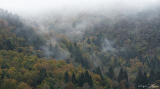 """"""" Il respiro del bosco """""""