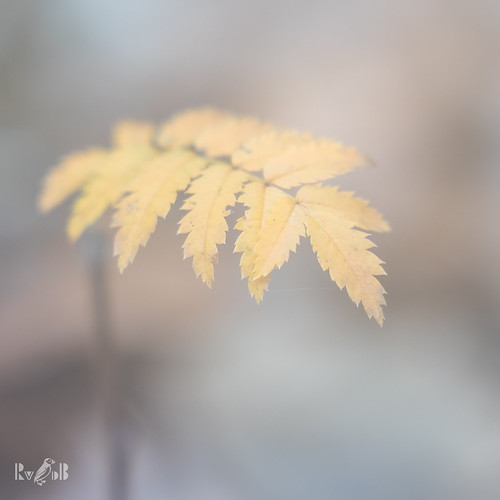 """""""Autumn is a second spring when every leaf is a flower"""" (Albert Camus)"""