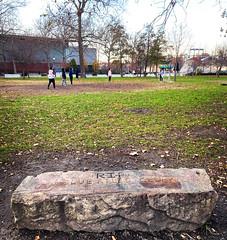 Memorial to a Blue Atlas Cedar, 1931-1994