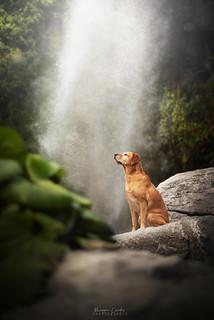 Tina - Waterfall