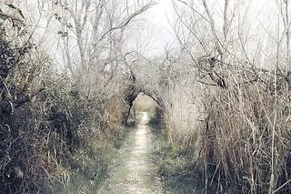 beyond the way  (III)