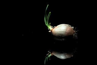 Spotlight:  Onion
