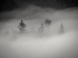 fog-shrouded forest - Bremgartenwald bei Bern