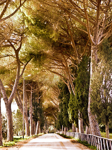 photo - Quiet Lane, Cerveteri, Italy -TpzAdj