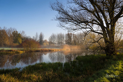 A fine morning by the pond